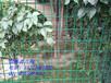 兰州养殖网荷兰网浸塑围栏网优质丝网全网最低
