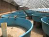 鸿硕玻璃钢养殖孵化池孵化池1500500