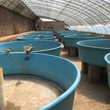 鸿硕玻璃钢养殖孵化池孵化池1500500图片