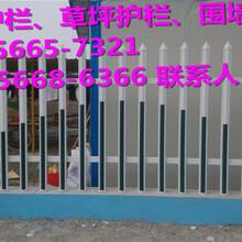 滨江区绿化护栏、草坪护栏怎么样图片