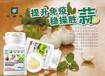 互联网安利专卖店供应纽崔莱薄荷香蒜片增强人体免疫力