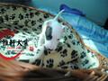 北京高信誉犬舍出售纯种海盗眼纯白色牛头梗幼犬图片