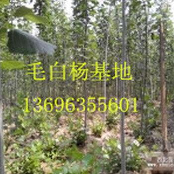 1503220218554371_副本