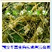 平菇提取物平菇浓缩粉平菇喷雾干燥粉平菇浸膏粉平菇粉