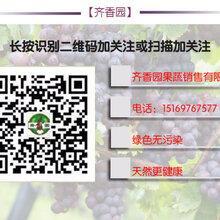 成武齐香园果蔬销售有限公司图片