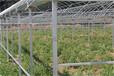 蔬菜大棚建造技术连栋拱型温室建造价格