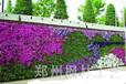 厂家直销室内室外专用仿真植物墙背景墙墙体绿化办公室家具酒店用