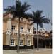 仿真大王椰河南热带造景树厂家玻璃钢杆大王椰室内外专用大小型大王椰