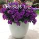 河南仿真花假花廠家仿真杜鵑花盆栽花箱裝飾房地產用綠植盆栽