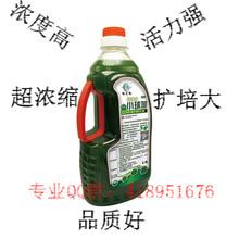 廣東珠海水產養殖小球藻哪里有批發圖片