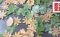 渭南鲜面条短期速成班特色果蔬面蝴蝶面扯面技术培训