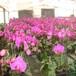 供酒泉花卉苗和甘肅苗木供應商