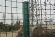 供山东中鸿波浪网养殖铁丝网铁丝网围栏中鸿荷兰网厂中鸿荷兰网厂家直销