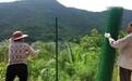 团风县生态养殖蔬菜基地钢丝网围栏网黄冈种植护栏网价格