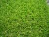 人造草坪专家