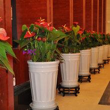 天津滨海新区花卉租赁哪家好-天津滨海新区花卉租赁哪家好万卉园园林绿化