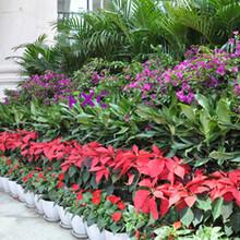 天津绿植租赁公司-天津绿植租赁公司万卉园园林绿化