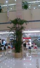 天津开发区花卉租赁价格-天津开发区花卉租赁价格万卉园园林绿化