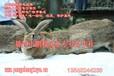 商品兔、肉兔养殖前景空间仍然大,养兔技术很重要