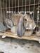 定西伊拉兔肉兔農廣天地專訪兔場