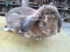 石嘴山兔子肉兔農廣天地專訪兔場