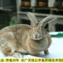湘西养兔送大棚送笼具送饲料是真的吗肉兔耗料低,种兔图片