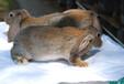 新鄉養兔送兔籠肉兔農廣天地拍攝種兔場,種兔