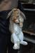 鄂爾多斯公羊兔鵬程兔業公羊兔農廣天地拍攝種兔場,垂耳兔
