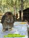 肉兔效益高圖