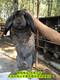 公羊兔肉兔場家圖