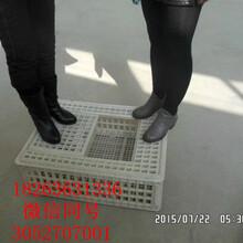 耐磨塑料鸡笼成鸡运输笼塑料鸡筐运输专用鸡笼