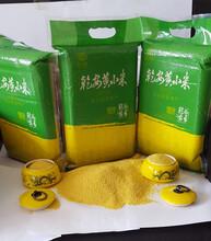 瑞金黄小米批发价格,井冈山黄小米厂家直销,德兴黄小米贴牌加工