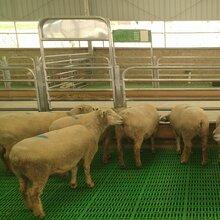 陇南养羊用漏缝板塑料羊铺板结实耐用母羊产床图片