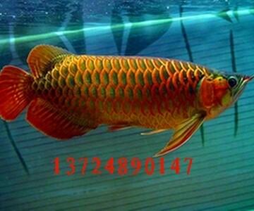 广州伊森水族科技有限公司
