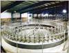 供应自动化转盘式挤奶台大型挤奶设备出售