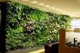 仿真植物墙仿真植物墙仿真绿植墙仿真绿色植物墙