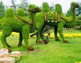 定做仿真植物造型、仿真植物绿雕、仿真植物动物造型、仿真植物卡通人物图片