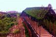 紫薇走廊造型,紫薇走廊长廊最新报价,造型走廊,紫薇植物造型