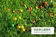 美博仿真人造草坪室内幼儿园地毯阳台绿植色户外假草皮