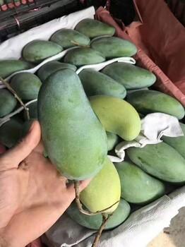 广西百色芒果批发价格淘宝南国鲜果屋