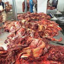 山东硕实--蒙古马肉、进口马肉的全国供应,专属定制图片