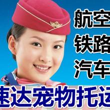 北京速达航空汽运铁路宠物托运(通州区上门接)图片