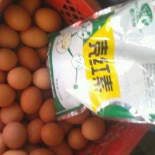 蛋鸡壳红素功效_壳红素改善蛋壳颜色效果好图片