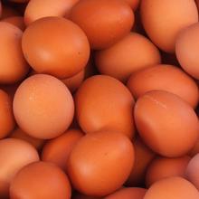 正规厂家壳红素非小作坊中草药成分质量有保证图片