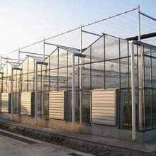 供青海智能溫室大棚哪家好和西寧智能溫室大棚