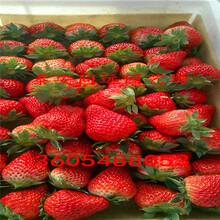 最好吃的草莓苗品种什么草莓苗品种好图片