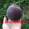 连续结果性强水蜜桃树苗、水蜜桃树苗全部点评
