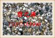 石家庄鹅卵石生产
