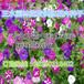 三明将乐县高速公路铁路绿化固土护坡草籽花籽批发