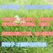 广东潮州草坪草种夏季什么草籽好?
